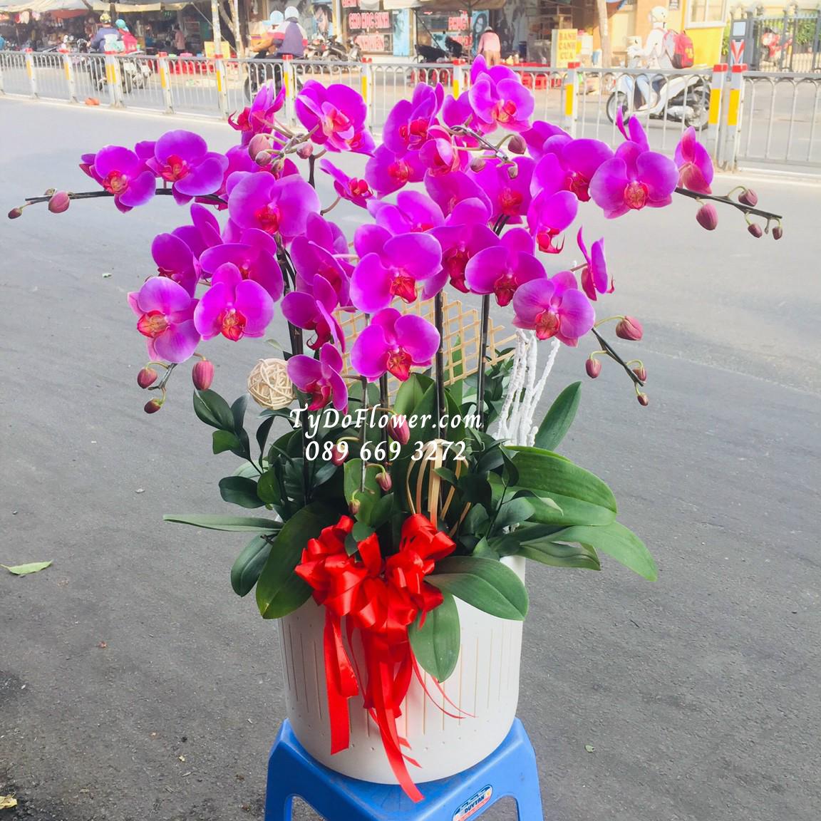 lan hồ điệp TyDo Flower